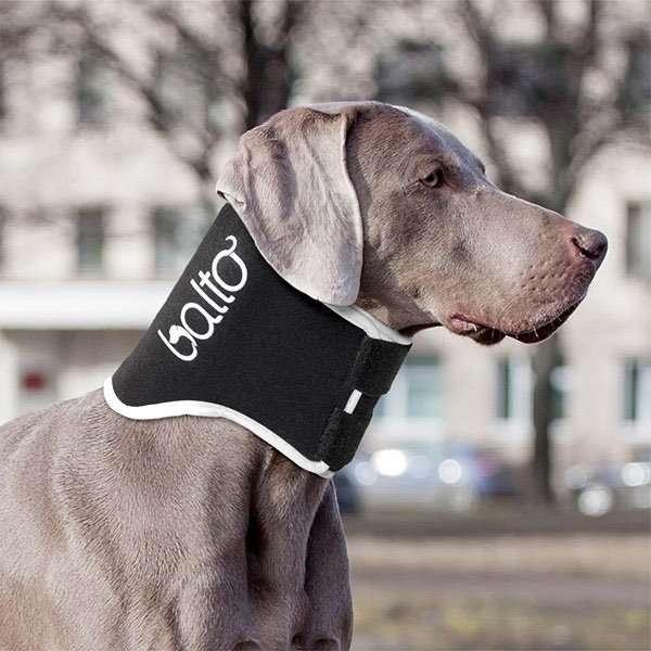 BTneckecodog