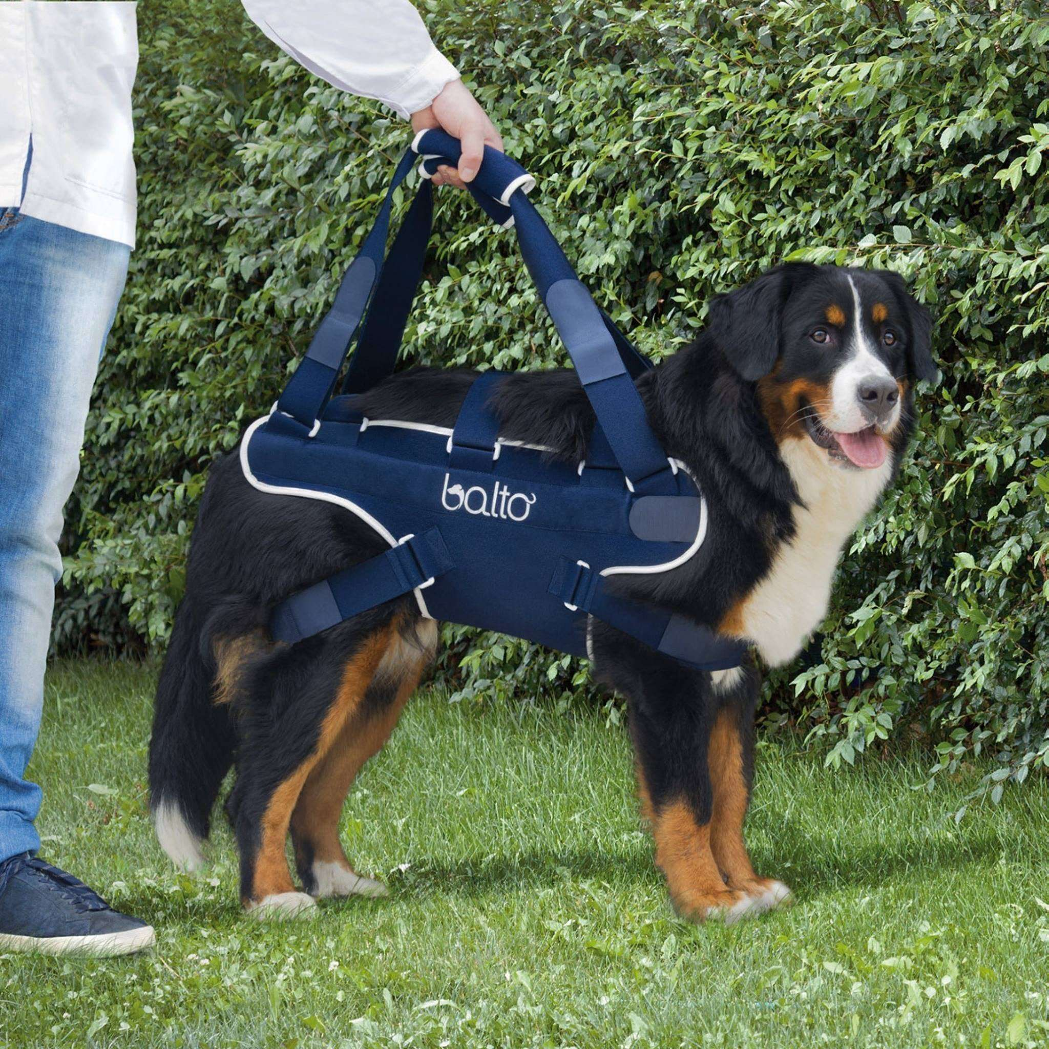 Dog Rear Lift Harness for hind Leg Support – Zoomadog Dog | Blog