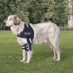 Dog Elbow Support Uk